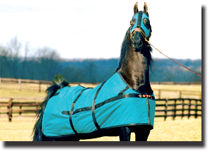 equi-lite blanket with hood