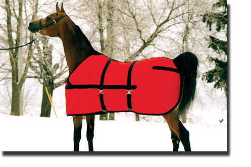 Red & Black Show Coat Blanket