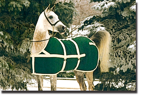 Forest Green & Tan Show Coat Blanket